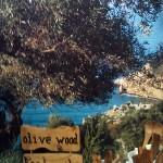 Olivetree-skiathos07