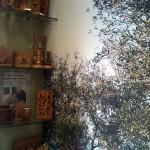 Olivetree-skiathos08